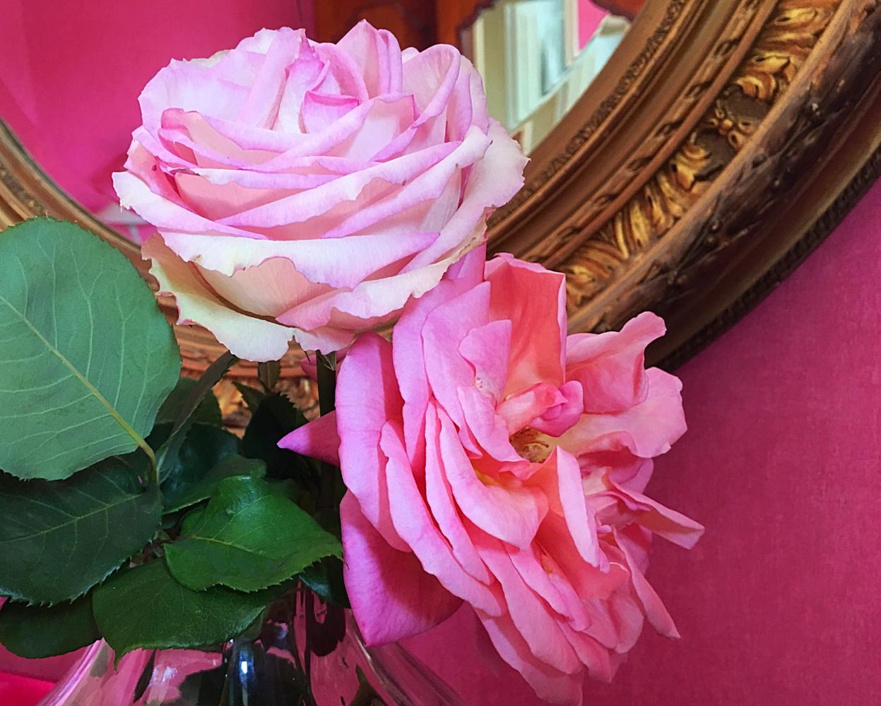 Simply rose